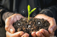 Tecnologías innovadora para hacer uso eficiente de nutrientes, en los cultivos de invierno.