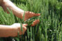Innovación en productos fitosanitarios basados en la sustentabilidad ambiental y la tradición empresarial japonesa.