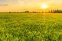 La adopción de FieldView se sextuplicó en hectáreas desde marzo 2020.
