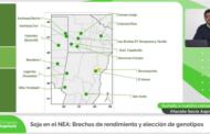 Soja en el NEA: brechas de rendimiento y elección de genotipos