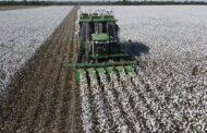 Las semillas de algodón ya llegan al campo vía e-commerce