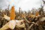 Las lluvias al fin del invierno traen alivio a la agricultura pampeana