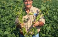 Nutrientes que engordan la rentabilidad agrícola