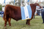 New Holland Agriculture presenta nuevos equipos fabricados en su planta de Córdoba