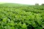 Acuerdos y adquisiciones de un gigante mundial en el negocio de la fertilización